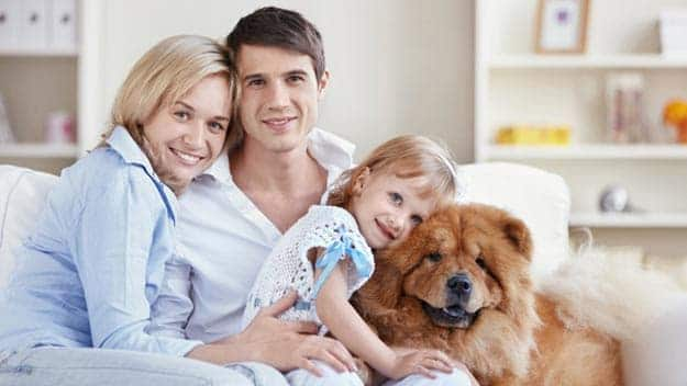 Wills & Trusts dog-young-family Direct Wills Huddersfield
